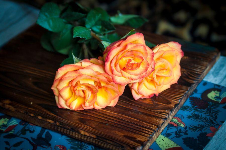 Красивый подарок на 8 марта: цветы, стабилизированные воском