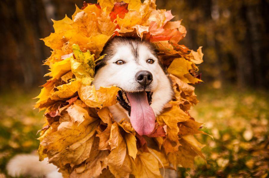 Как сплести корону из осенних листьев за пару минут прямо в парке. Дети в восторге)))