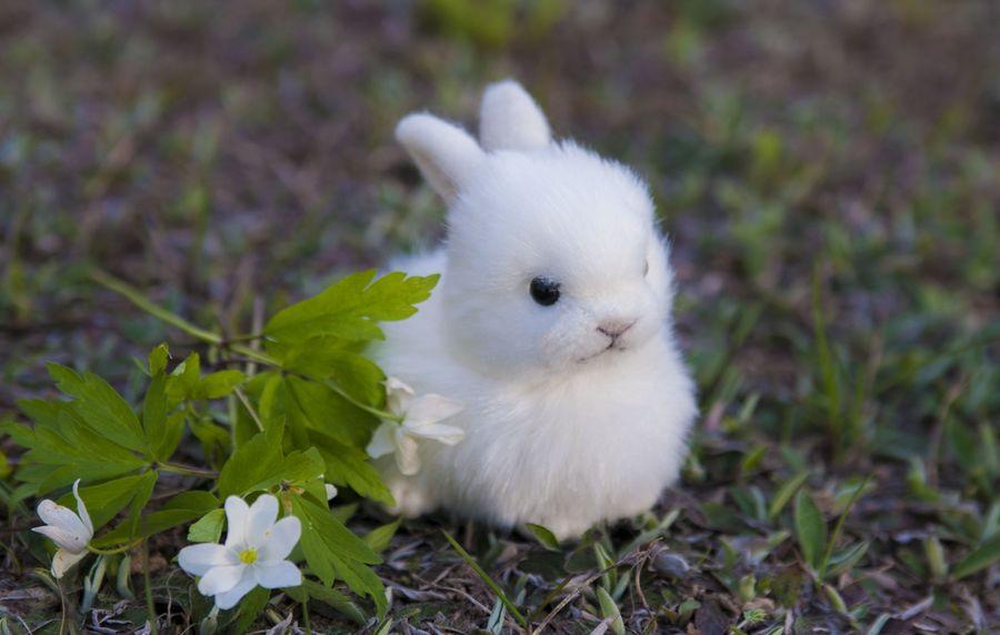 Шьем милого, почти живого кролика. Мех шерсть